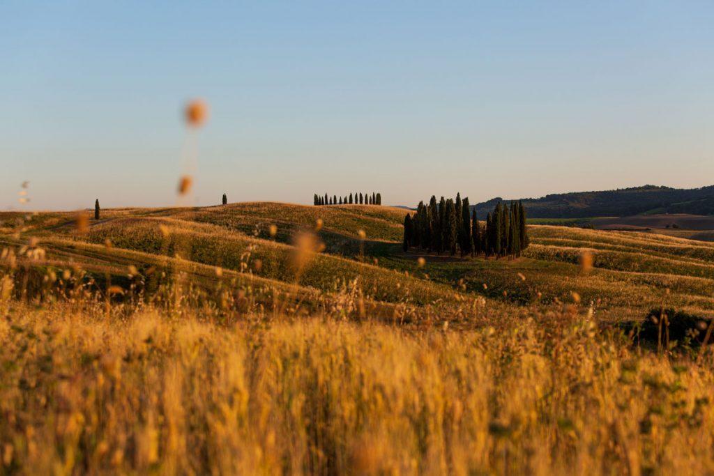 landscape_filippo_gabutti_21